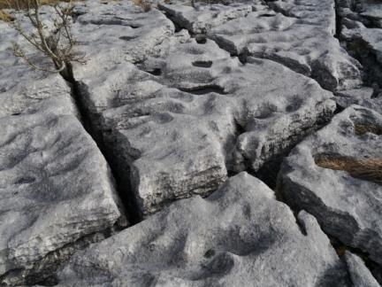 Limestone pavement essay writer