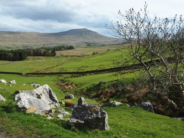 Ingleborough from just beyond Ellerbeck