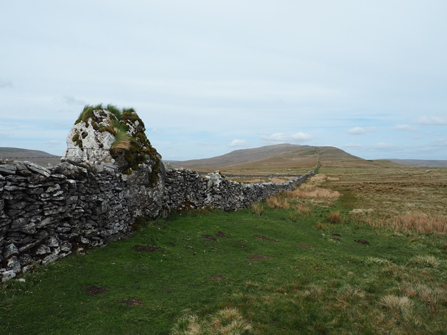 A rather hirsute standing stone with Whernside in the distance
