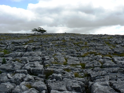 A fine stretch of limestone pavement on Great Asby Scar