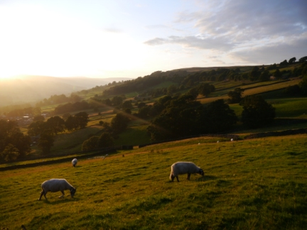 Summer evening in Nidderdale