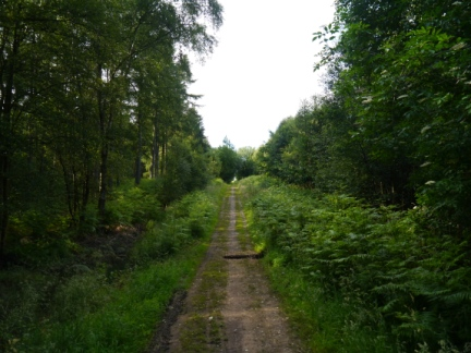 The path through the plantations of High Moor