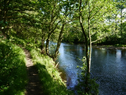 The River Nidd near Summerbridge