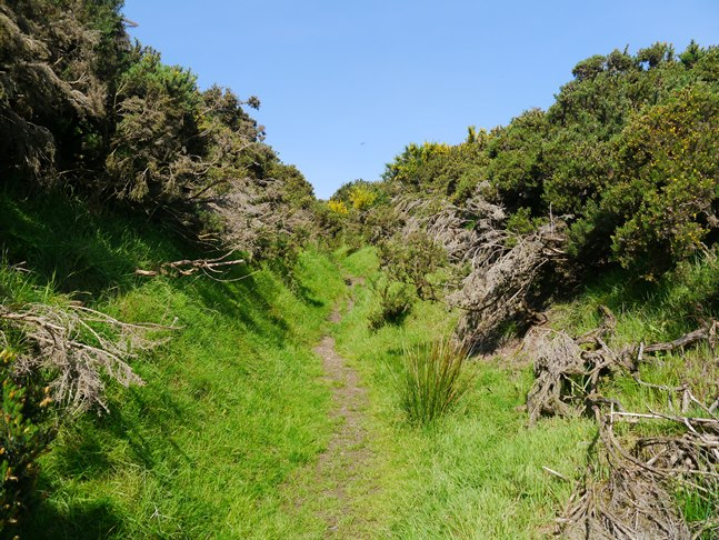 The gorse lined path climbing up from Chop Gate